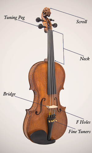Violin, Viola, Cello, or Bass